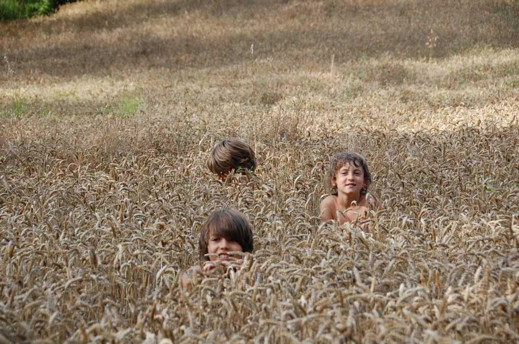 campo de avena